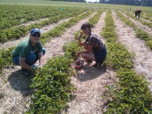 Maly and Cody picking strawberries