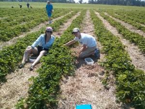 Mariah and Cameron picking strawberries